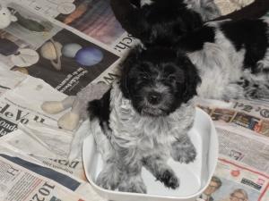 27 mrt | hond in de pot..