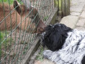 4 mei | de geit krijgt een kusje